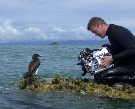 Nick Hope shooting young blue-footed boobie